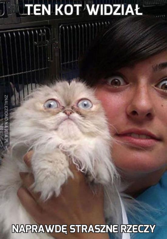 Ten kot widział