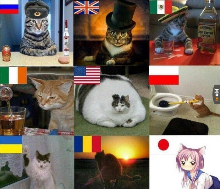 Koty z różnych krajów