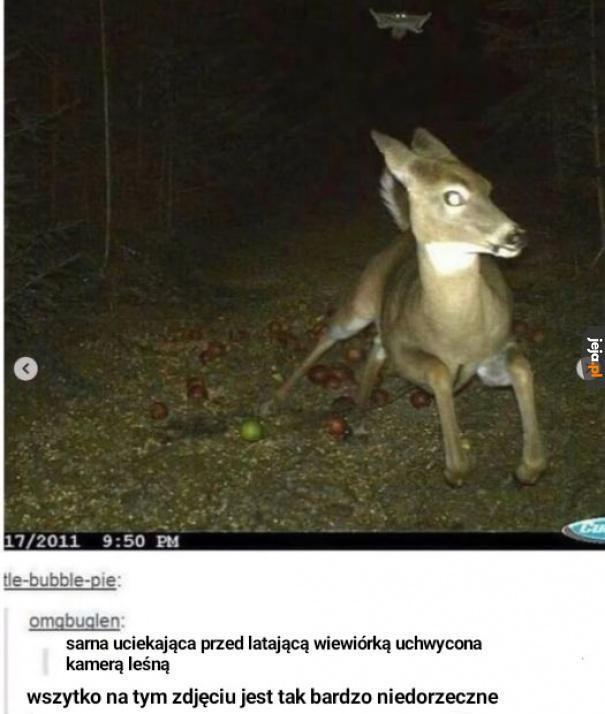 Nocą w lesie dzieją się dziwne rzeczy...