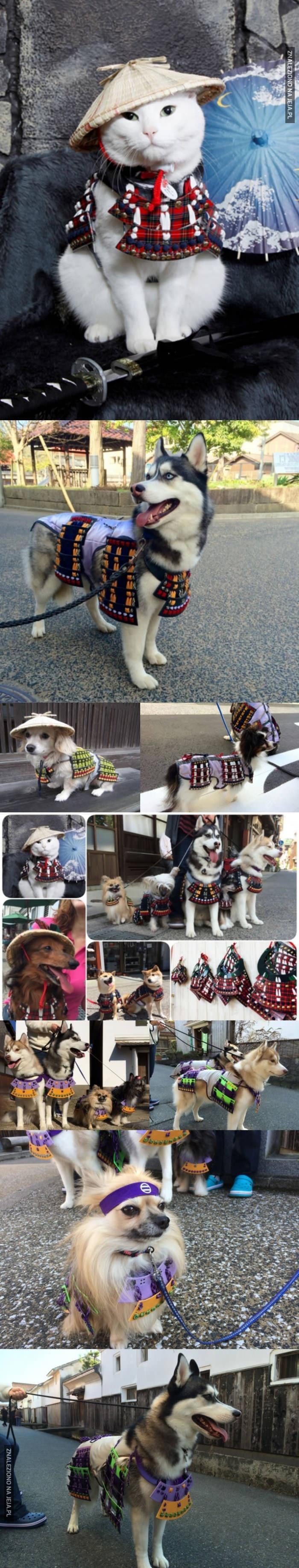 Samurajskie zwierzaki