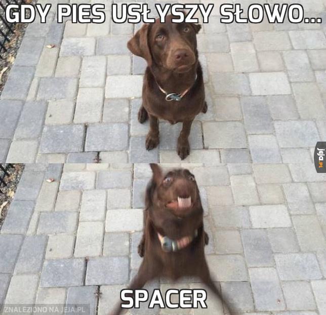 Gdy pies usłyszy słowo...