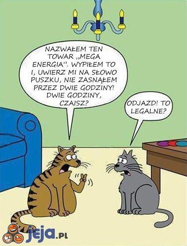 Nadpobudliwe koty