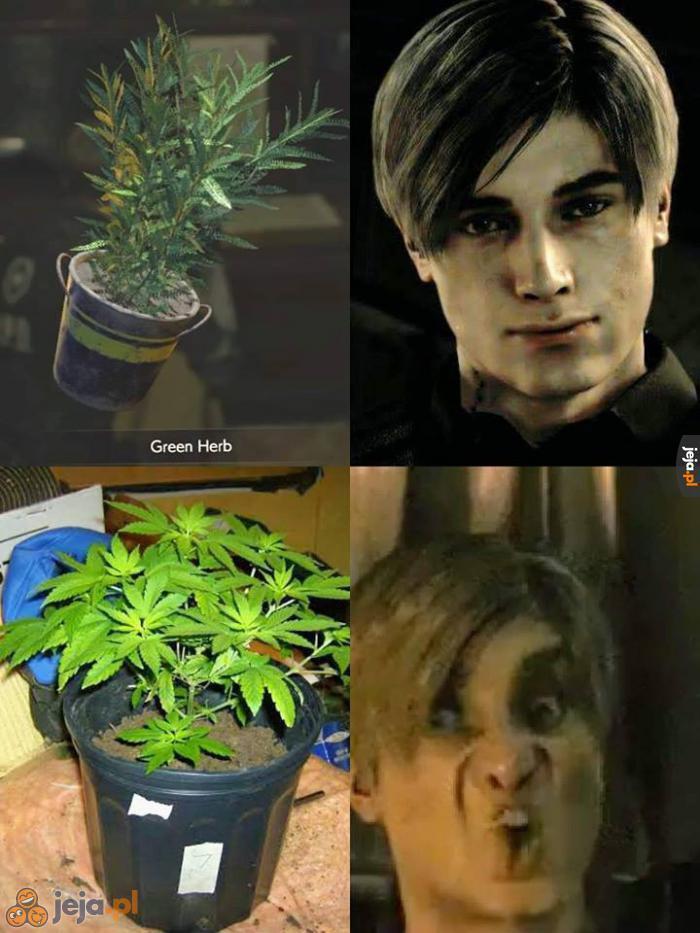 Zielona roślinka lecznicza - która lepsza?