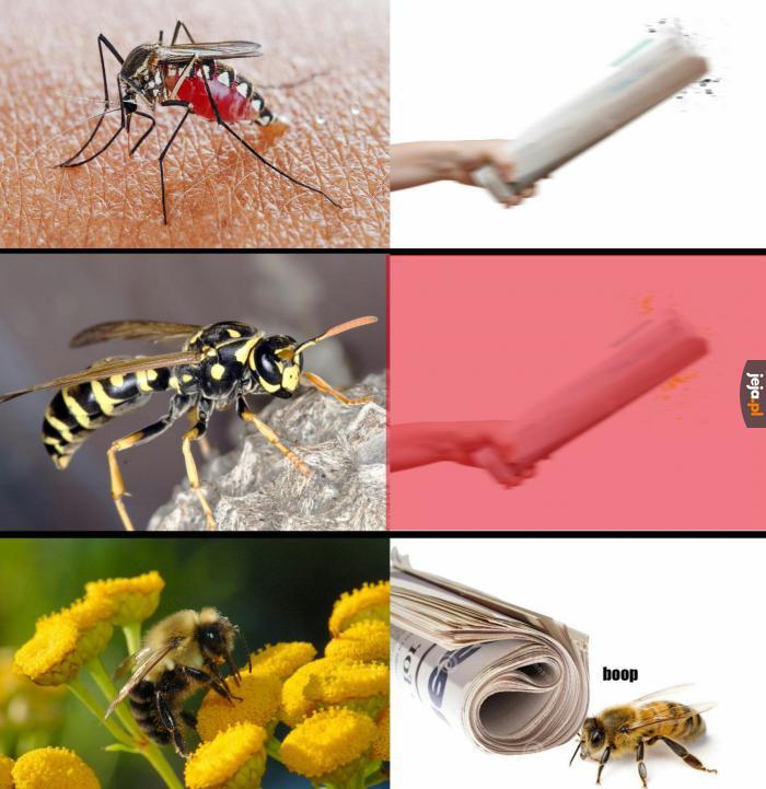 Niektóre robaczki są miłe i bardzo pożyteczne