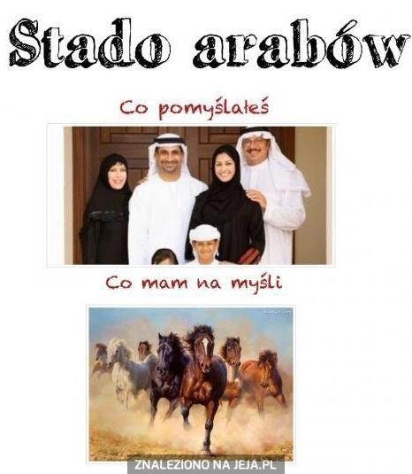 Stado arabów