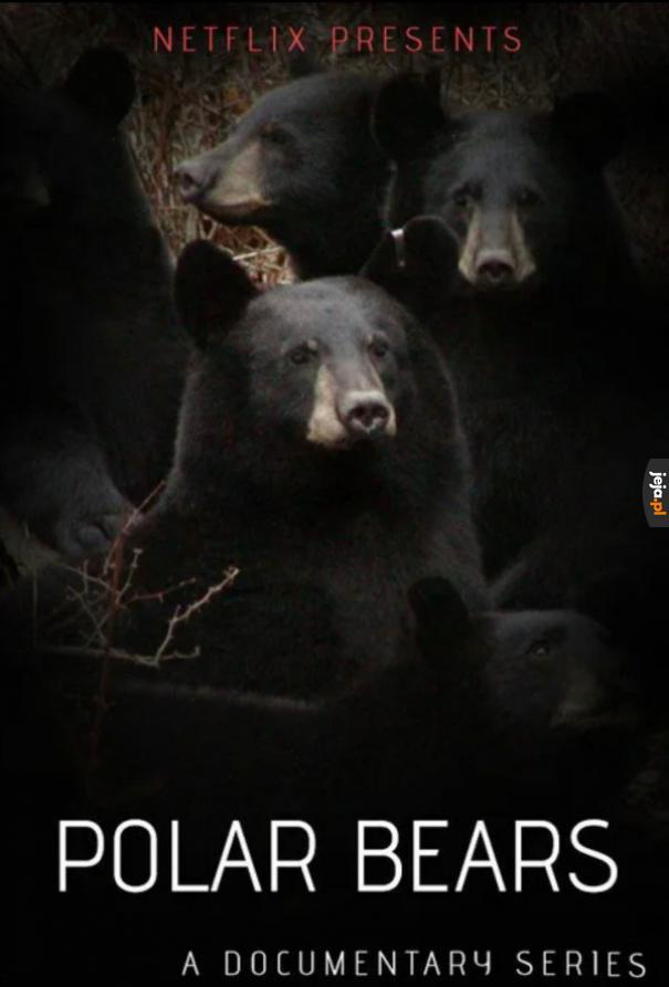 Dokument o polarnych niedźwiedziach w wykonaniu Netflixa