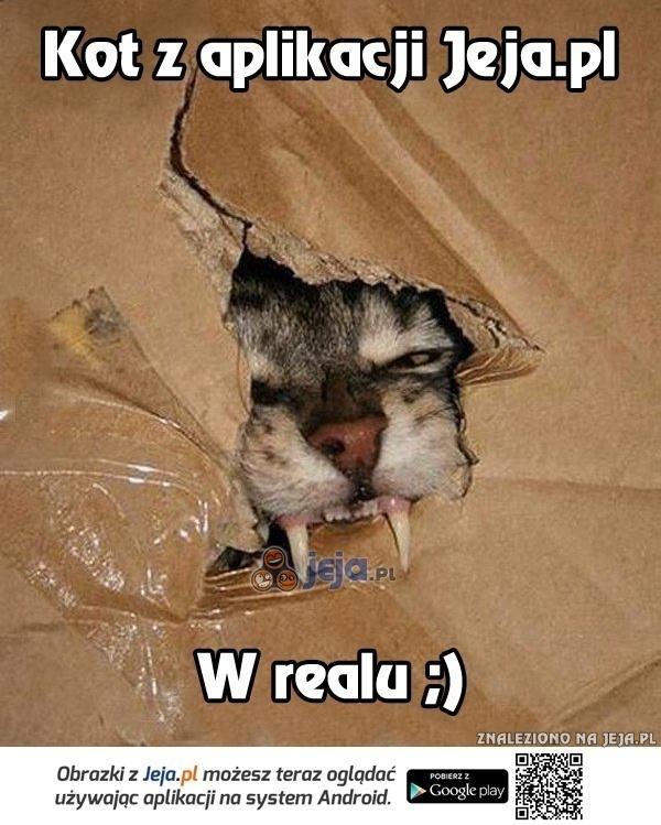 Kot z aplikacji Jeja.pl