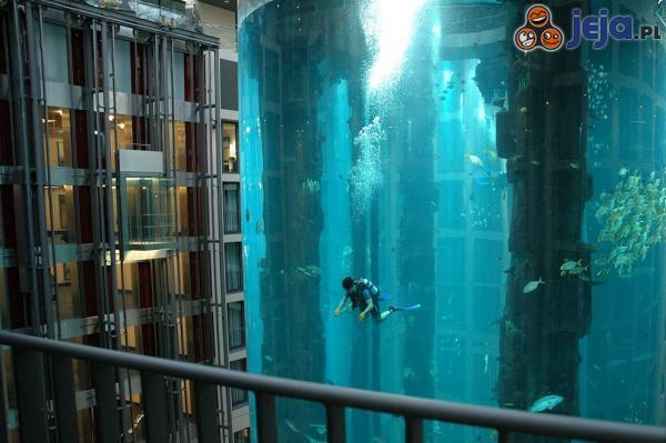 Nurkowanie w mega akwarium