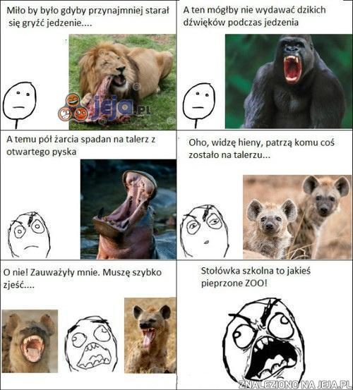 Zoo w szkolnej stołówce