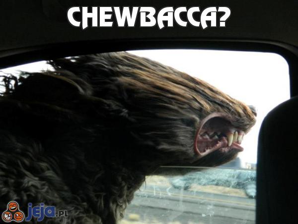 Chewbacca?
