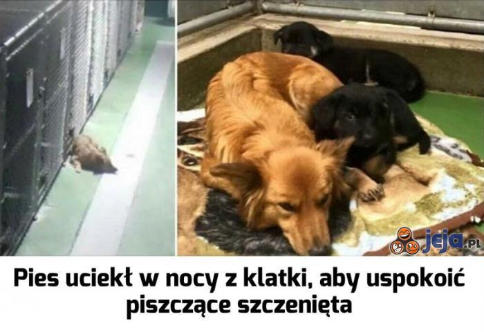 Nie zawsze zasługujemy na psy