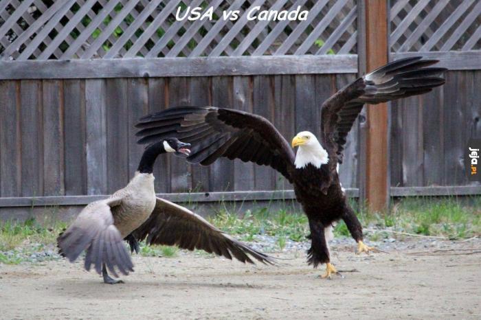 Kanada vs Ameryka