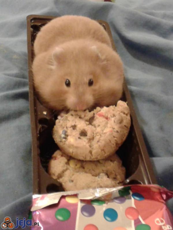 Kto podjada ciasteczka