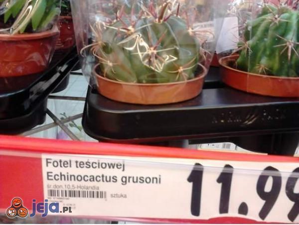 Taki tam kaktus