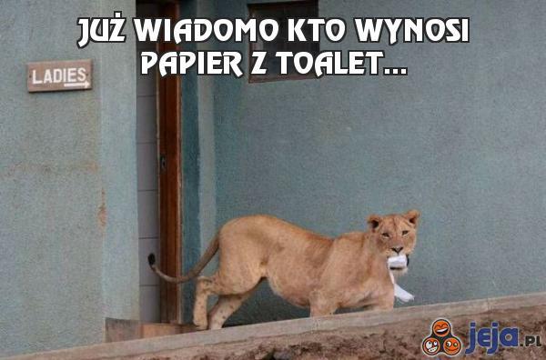 Już wiadomo kto wynosi papier z toalet...