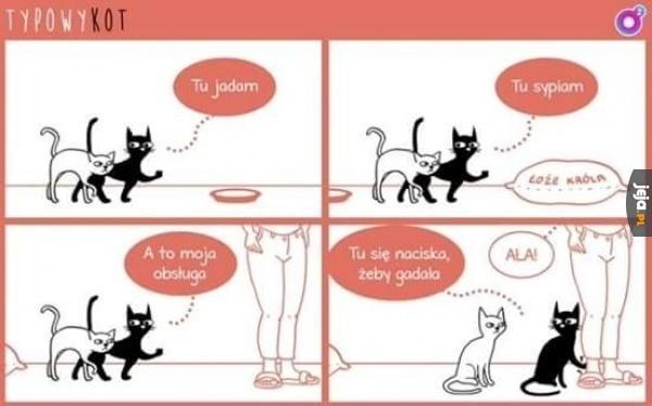 Typowy kot oprowadza po domu