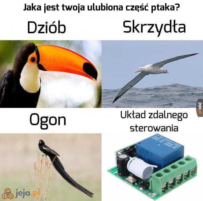 Ptaki to spisek rządowy!