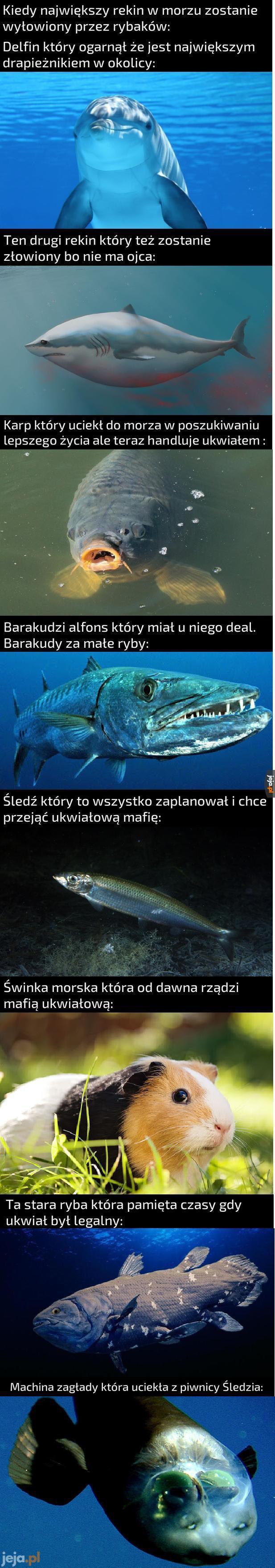 Najciekawsze gatunki morskie