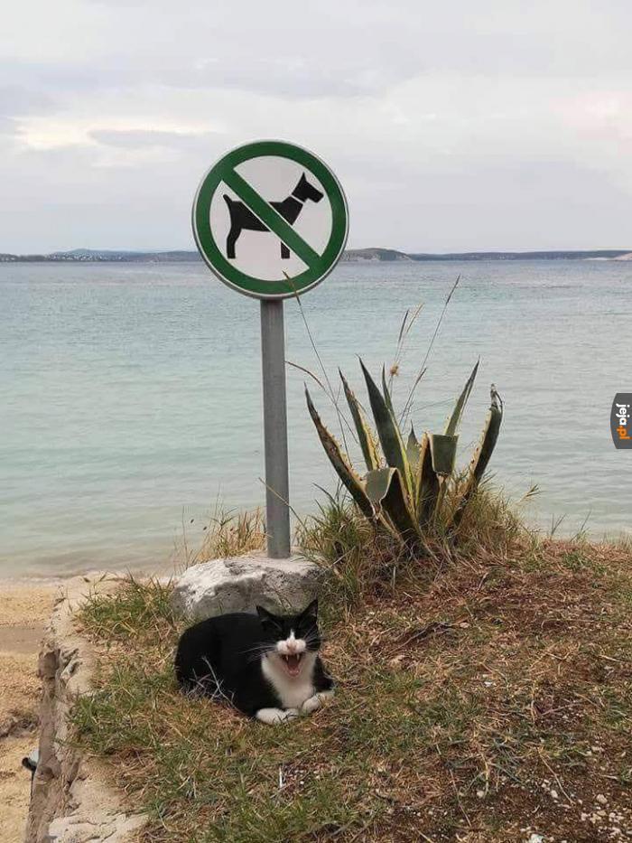 Koci strażnik