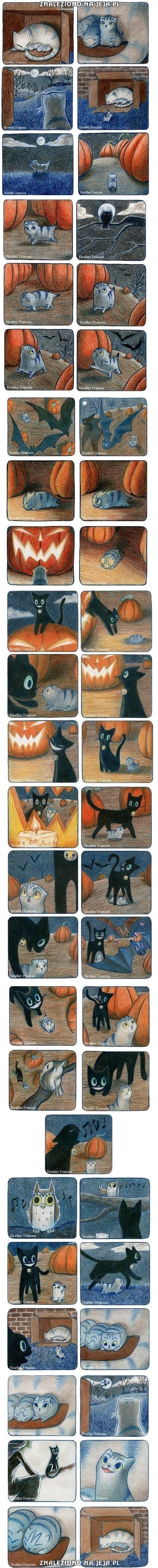 Historia małego kotka