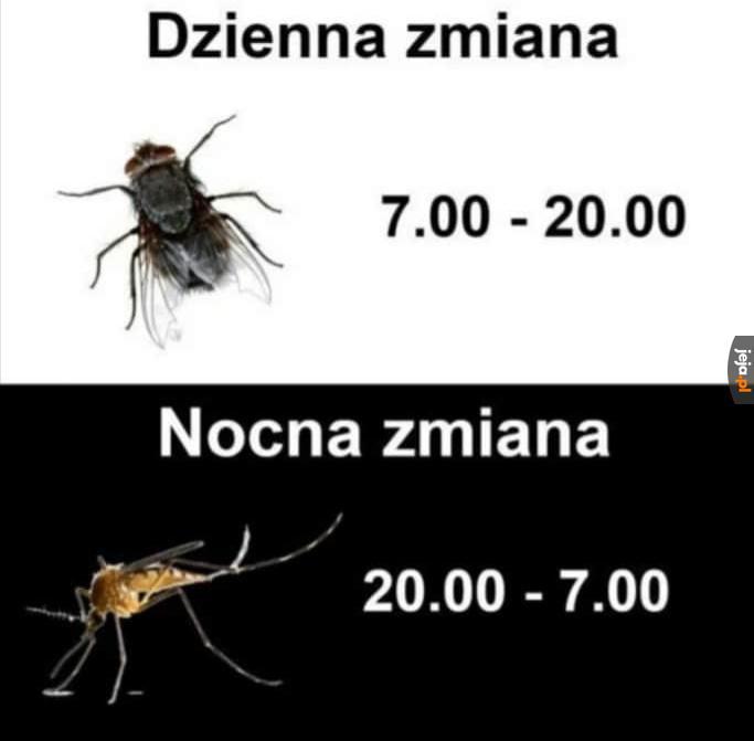 Oba denerwują, ale mucha przynajmniej nie gryzie