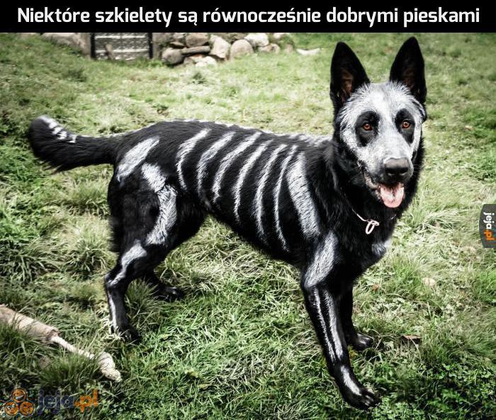 Halloween to święto nie tylko dla strasznych szkieletów
