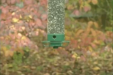 Karmnik dla ptaków z zabezpieczeniem antywiewiórkowym