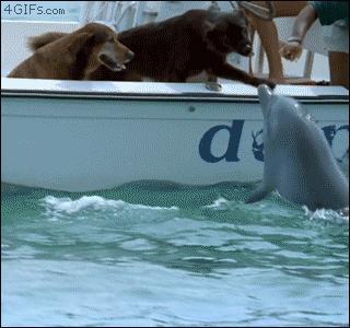 Co powstanie ze skrzyżowania psa i delfina?