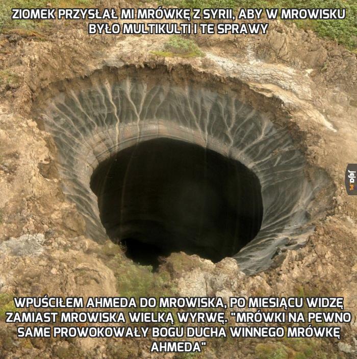 Ziomek przysłał mi mrówkę z Syrii, aby w mrowisku było multikulti i te sprawy