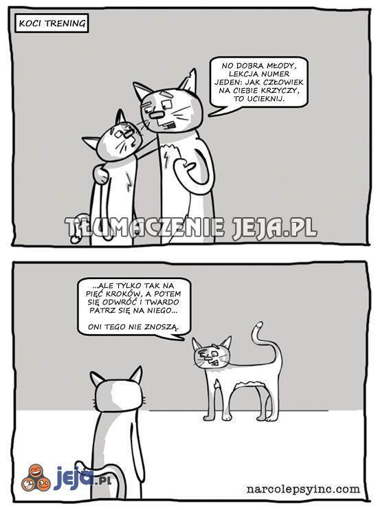 A więc tak szkoli się koty...