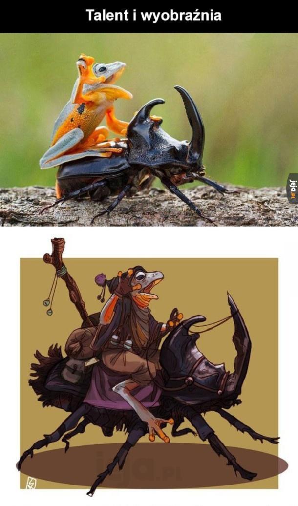 Żabi jeździec
