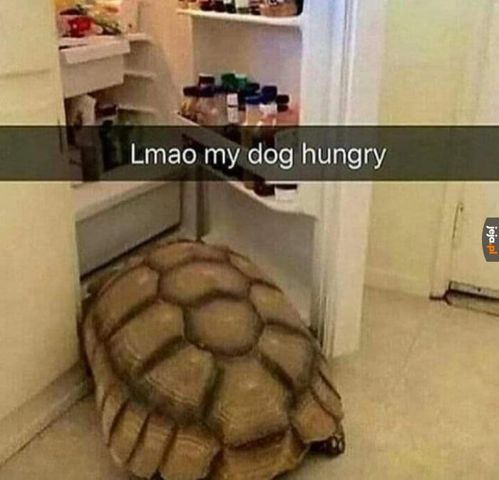 Dziwny ten pies