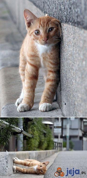 Kot vs grawitacja