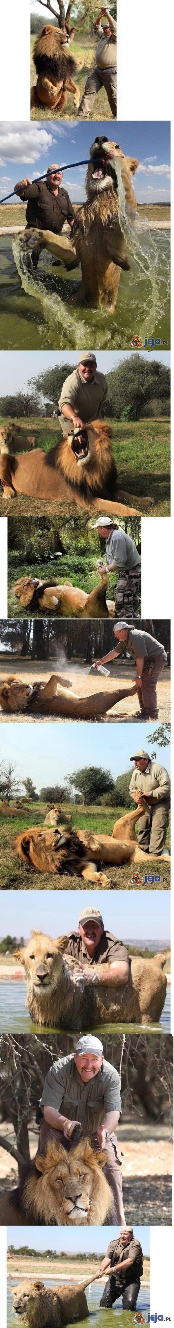Opiekun lwów
