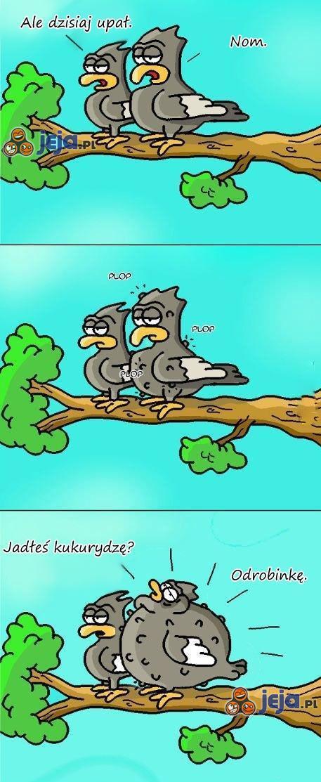 Ptaki w upalny dzień