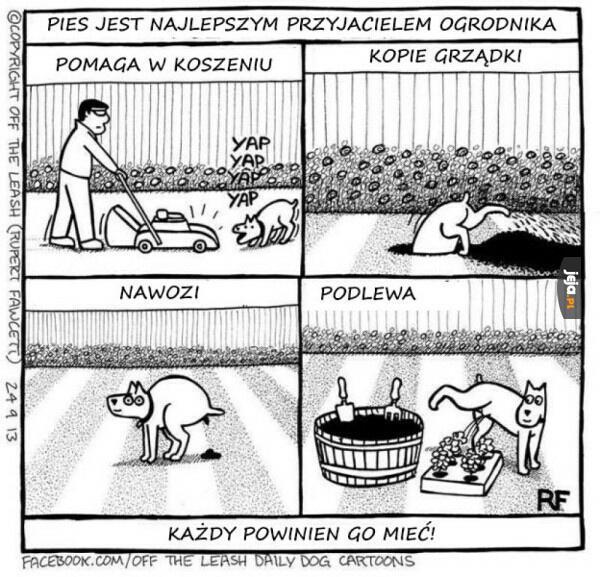 Pies najlepszym przyjacielem ogrodnika