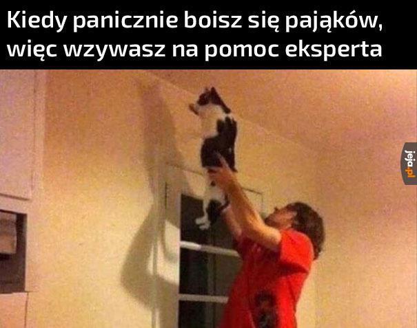 Kot Bożydara na drugiej zmianie