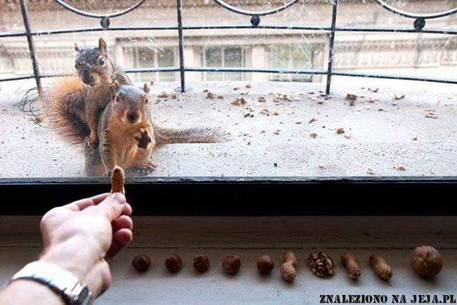Znęcanie się nad wiewiórkami