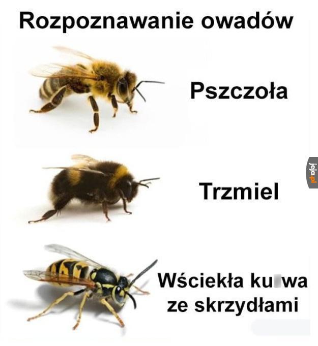 Pszczoła 290 Najlepszych Memów Jejapl