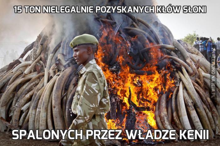 15 ton nielegalnie pozyskanych kłów słoni