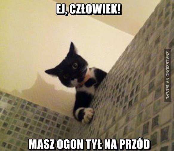 Koteł, nie podglądaj!