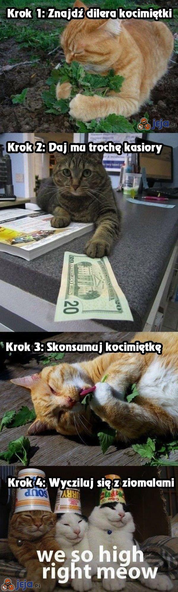 Poradnik dla kocich miałogowców