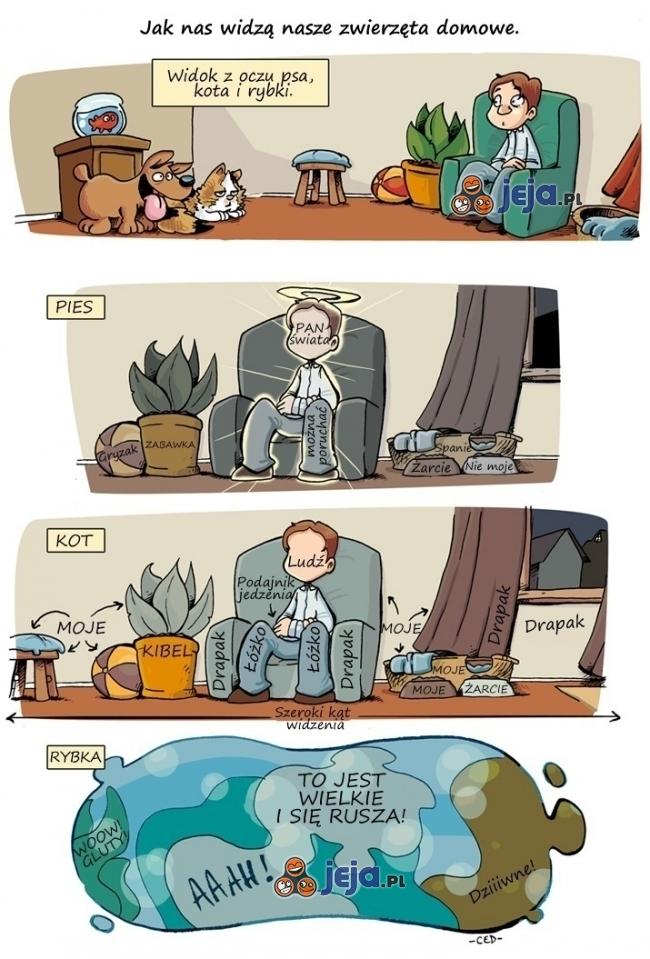 Jak nas widzą nasze zwierzęta domowe