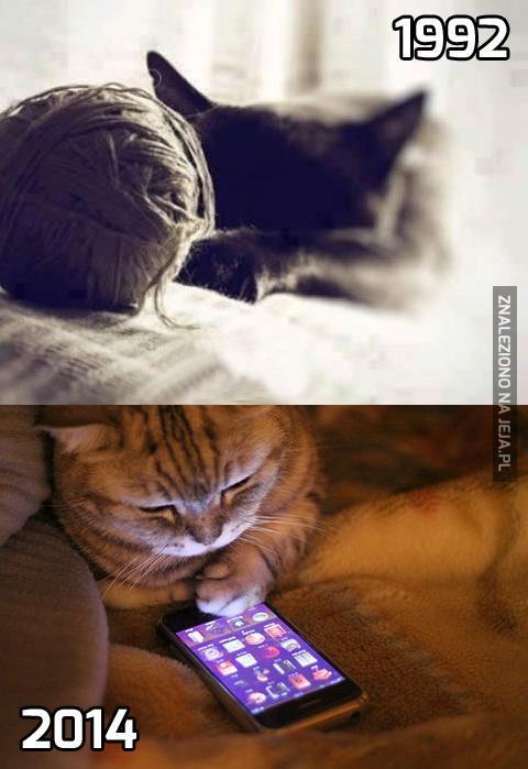 Koty się zmieniają...