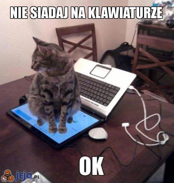 Posłuszny kot