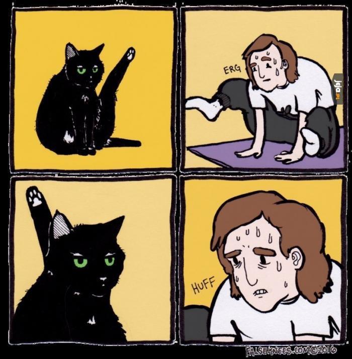 Kot vs człowiek