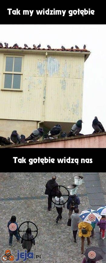 Jak nas widzą gołębie