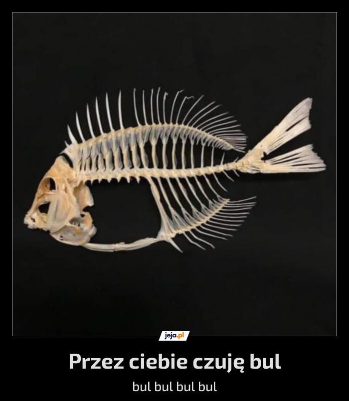 Szkieleryba