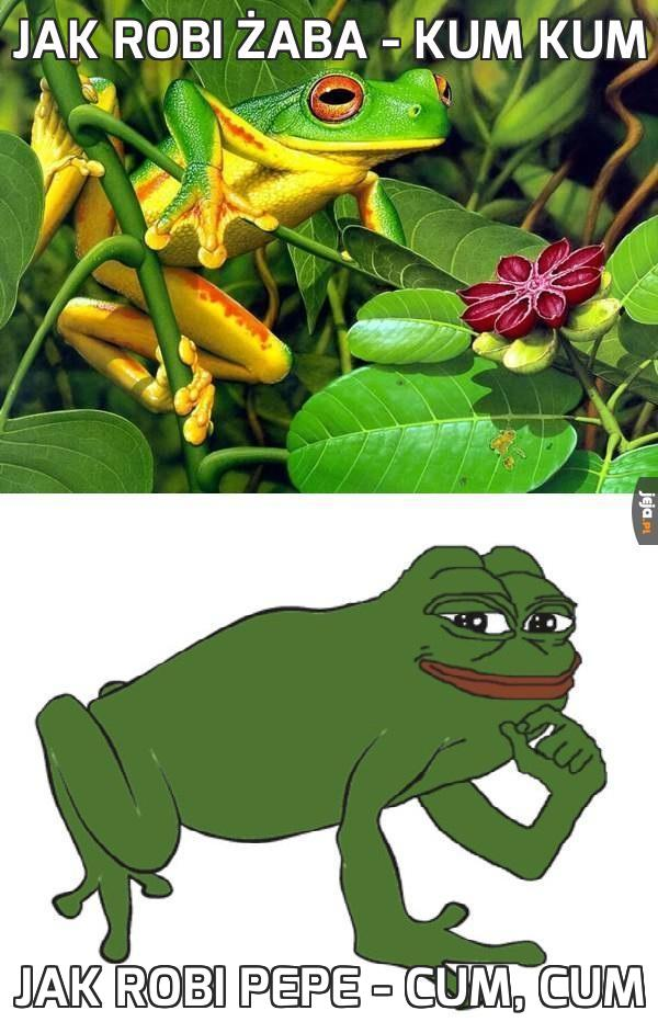 Jak robi żaba - Kum Kum