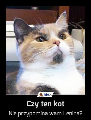 Czy ten kot
